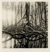 http://fr.iandykmans.be/files/gimgs/th-10_mangrove027.jpg