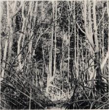http://fr.iandykmans.be/files/gimgs/th-8_mangrove056.jpg